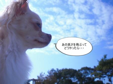 new_CIMG4507_20121206162255.jpg