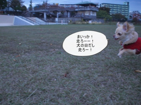 new_CIMG4537.jpg