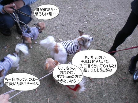 new_CIMG4600.jpg