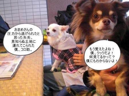 new_CIMG4642.jpg