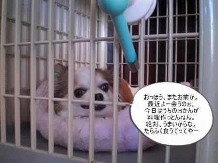 new_CIMG4680.jpg