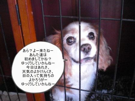 new_CIMG4683.jpg