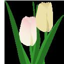 tulip_128.png
