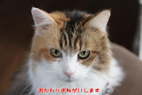 20130213125036c4e.jpg