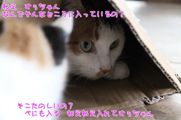 20130307143000a4c.jpg