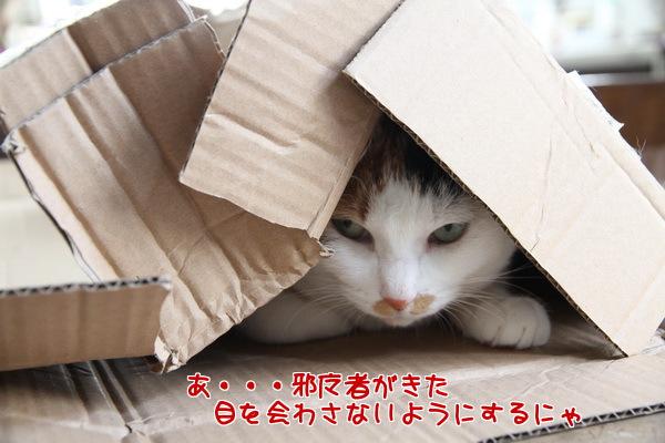 201303071433454ec.jpg