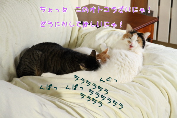 20130312231725566.jpg