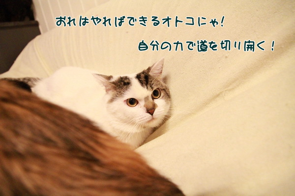 20130531003056c4d.jpg