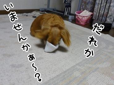 kinako1088.jpg