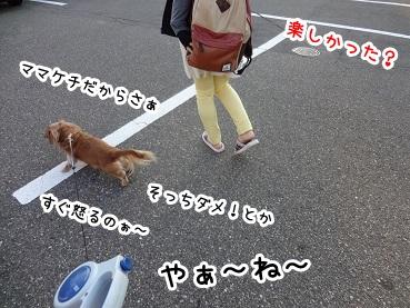 kinako1102.jpg
