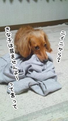 kinako1115.jpg