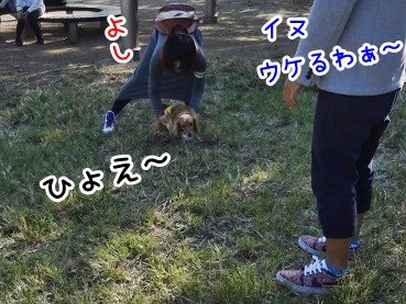 kinako1160.jpg