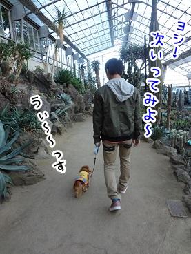 kinako1171.jpg