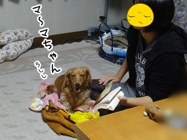 kinako1183.jpg