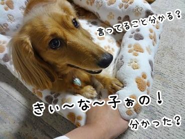 kinako1190.jpg