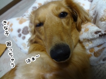 kinako1198.jpg