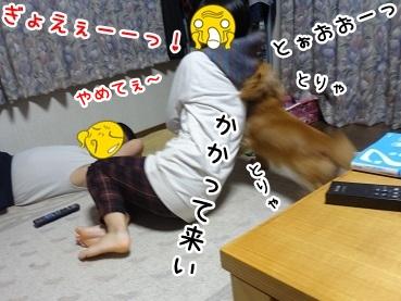 kinako1220.jpg