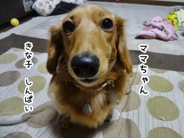 kinako1281.jpg