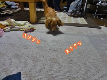 kinako1378.jpg