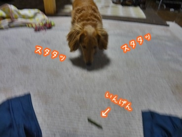 kinako1379.jpg