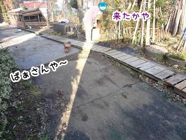 kinako1388.jpg