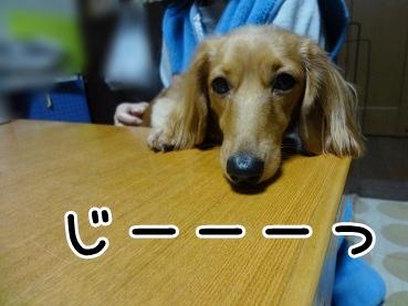 kinako1399.jpg