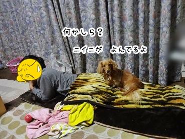 kinako1409.jpg