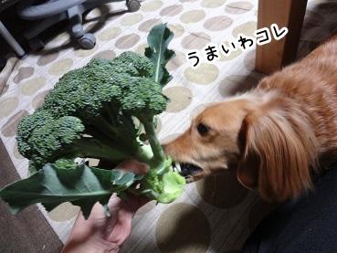 kinako1424.jpg