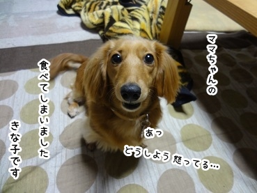 kinako1472.jpg