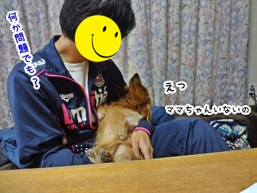 kinako1485.jpg