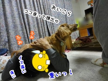 kinako1507.jpg