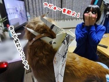 kinako1533.jpg