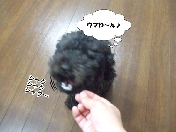 20120809215428ecc.jpg