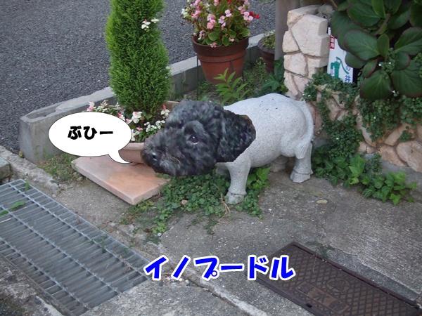 20120919213622759.jpg