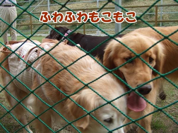 20121007214108876.jpg