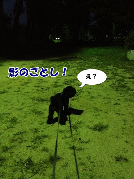 20121009213646e06.jpg