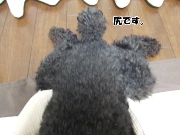 20121012215643c3a.jpg