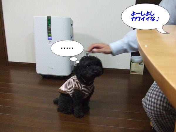20121103215843bbb.jpg