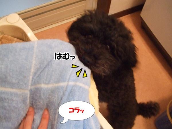 201211152231497f6.jpg