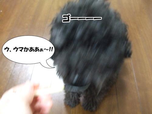 2013011621581553f.jpg