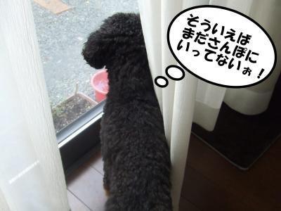 DSCF1054_convert_20120615213407.jpg