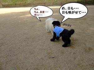DSCF1548_convert_20120603210150.jpg