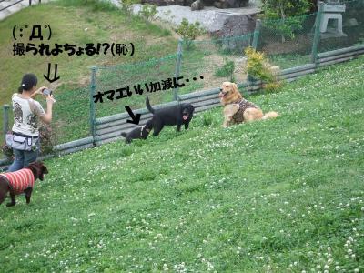 DSCF1713_convert_20120609215515.jpg