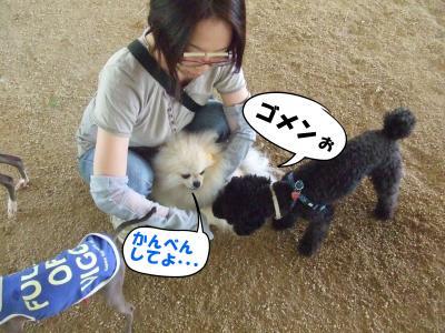 DSCF1769_convert_20120610211517.jpg