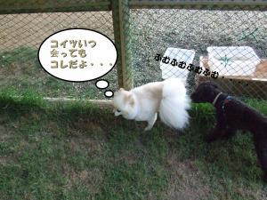 DSCF1777_convert_20120611211801.jpg
