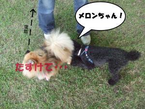 DSCF1779_convert_20120611212700.jpg