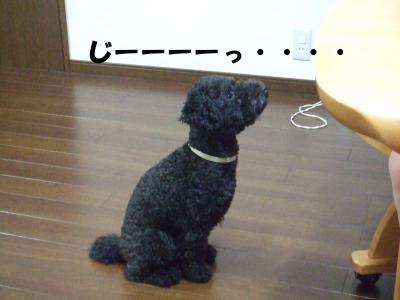 DSCF1815_convert_20120613215215.jpg