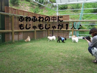 DSCF2104_convert_20120624212407.jpg