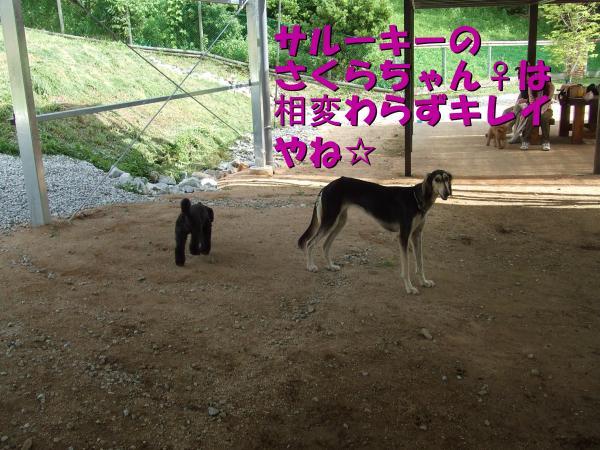 DSCF2468_convert_20120709223214.jpg