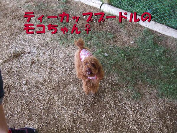 DSCF2472_convert_20120709224256.jpg
